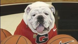 High Five: Bulldog Mascots
