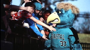 CWS: What is a Chanticleer?