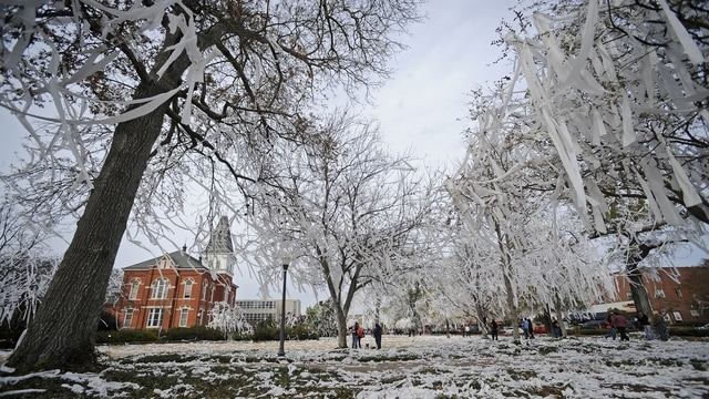 Traditions: Rolling Toomer's Corner