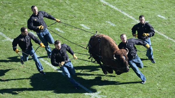 College Football: Best Mascot Entrances | High Five